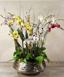 Ah Sam - Bay Area Florist: Spectacular Orchid Garden