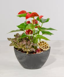 Vivid heart shaped anthurium blossoms and companion plants with golden accents celebrate the Lunar New Year.