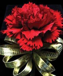 Carnation Corsage