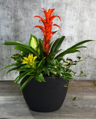 This stunning dish garden combines the exotic tropical beauty of bromeliads with the textual features of complimentary plants.