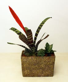 A tropical beauty with bromeliads.  This garden features a variety of bromeliads in a textured container.
