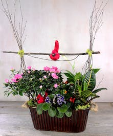 An autumn garden of tweets nestled among seasonal blooming plants of azalea, african violets and kalanchoe with green textural plants planted in a rustic metal container with rope handles.