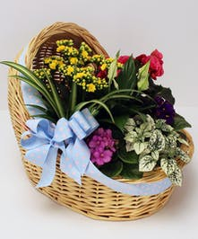 Surprise the new parents with a welcome bassinet basket of blooming plants.  Let us know if it's a boy, girl or still guessing and we'll add an appropriate bow.