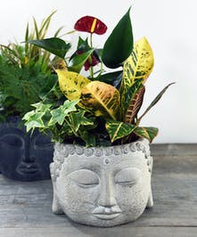 Our Buddha garden is presented with indoor plants. Buddha statues are known to have the ability to motivate and inspire people in their quest for attaining inner peace and happiness.