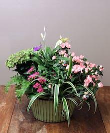 Flora Vista Garden - Ah Sam Florist of San Mateo, CA