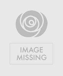 Aphrodite, the goddess of love and beauty, is showered in succulents.   Beautifully designed in a cement container, it makes a perfect gift for an indoor or outdoor side table.