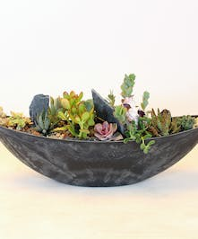 A textual collection of succulents and natural elements designed in a contemporary boat-shaped container. The variety of color and textures is a perfect selection.