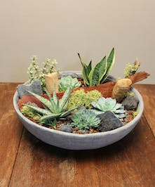 Stunning succulents in a variety of textures and colors are artfully designed in a faux cement container.