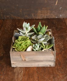 Succulent Gift Box Delivery San Mateo (CA) Same-day Delivery