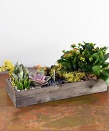 San Fransico (CA) Hipster Succulent  Garden - Ah Sam Florist
