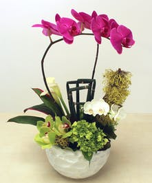 She has a style uniquely her own.  Celebrate her radiance with a contemporary design on phalanopsis, hydrangea, calla lilies featured in a textured white ceramic vase.