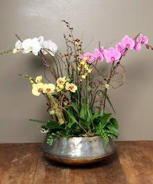 Avant Garde Orchid Garden - Ah Sam Florist