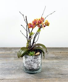 Look on the bright-side with a mini phaleanopsis orchid and succulents planted in a glass container.