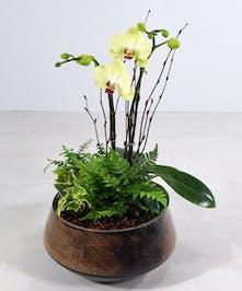 Mini Orchid Garden Peninsula (CA) Ah Sam Florist
