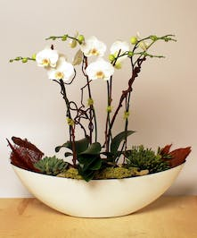 An artistic garden arrangement of orchids and succulents in a contemporary white container.