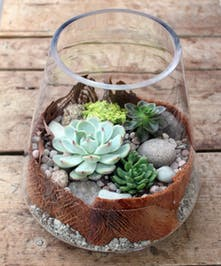 Succulent Terrarium - Approximately 10