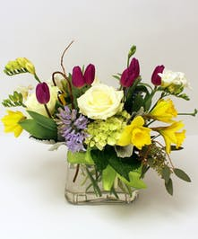 It's time for a spring party!  The awakening of springtime fun is captured in blooming tulips,sunshine daffodils and fragrant hyacinths and freesias designed in a glass vase.  The upgrade includes roses.