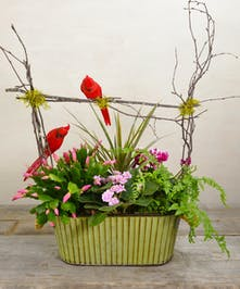 A winter garden of tweets nestled among seasonal blooming plants of Christmas catus, cyclamen, and african violet with green textural plants planted in a rustic metal container with rope handles.
