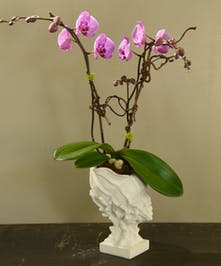The ocean beckons you with a sea white resin shell planting with a phalaenopsis orchid. Select from a single or double plant.