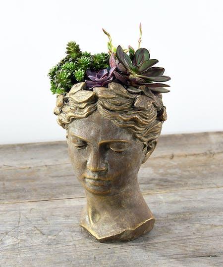 Terrariums | Succulents | Air Plants