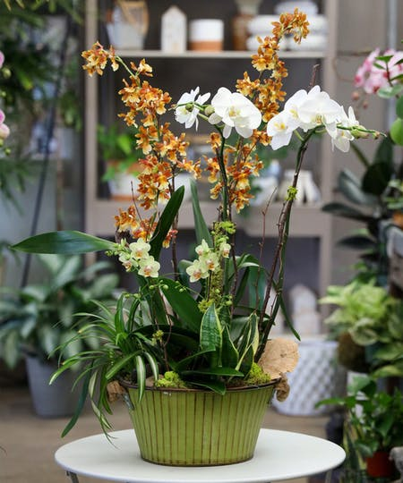 Orchid Plants & Gardens